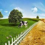 Unutulan sektör; tarım