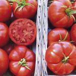 Rus televizyonunda bu sefer Yunan domatesinin kalitesi tartışıldı
